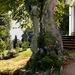 strom chameleon