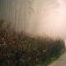 Cesty v hmlách