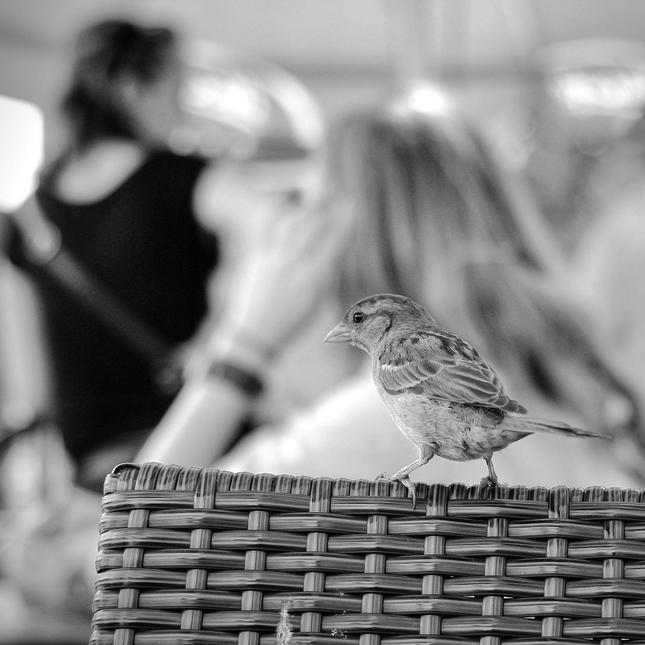 mc vrabec