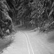 Zimné cestičky