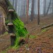 Mŕtvy strom plný života