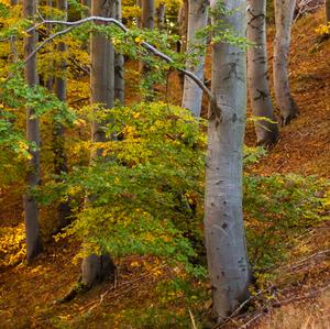 Na jesennú nôtu