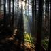 Lesná ríša