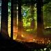 Lesné tajomstvo