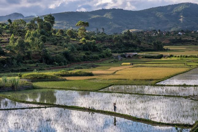 V krajine ryžových polí