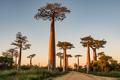 Alej baobabov