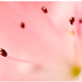 Ružový vesmír