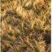 Strapatá tráva