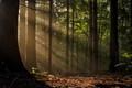 rano v lese