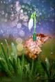 S hlavou nad dáždnikom...