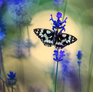 Čas vôní  a motýľov...