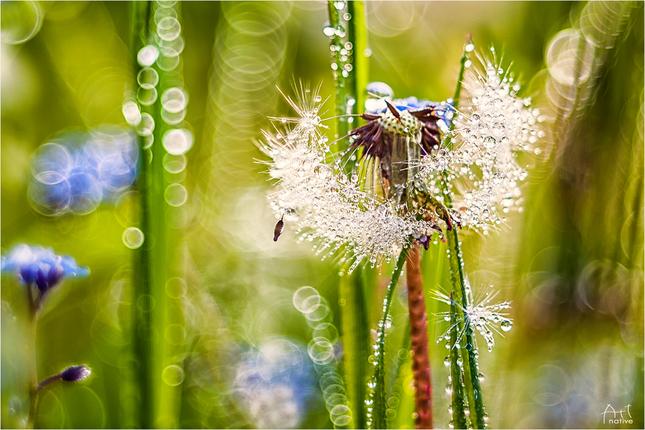 Tajomné svety ranných tráv