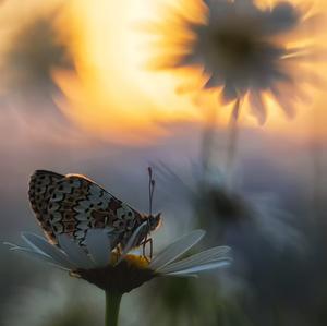 Motýlie svety