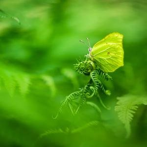 V zelených zákutiach