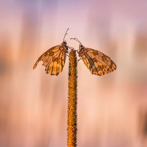 ...život, čo berie i dáva krídla
