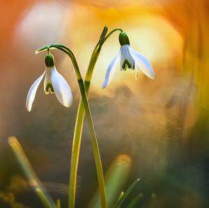 Vo svetle jari
