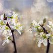 Čarotvary jari