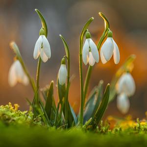 Jarné osvieženie