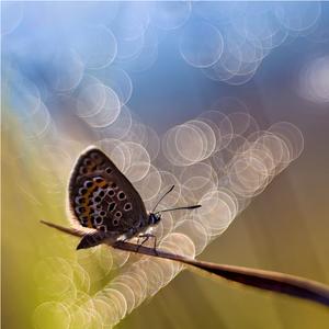 Motýlie sny