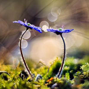 Zásnuby jari