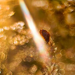 Malý, vo veľkom svete svetla...