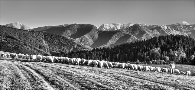Pomaly ovečky...
