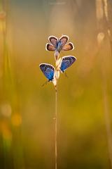 Motýli kvet