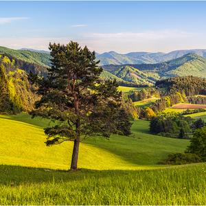 Krajina zelených snov...