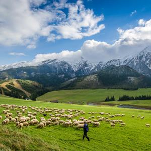 Tatry sa zladili s ovečkami