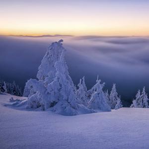 Stromky a sneh
