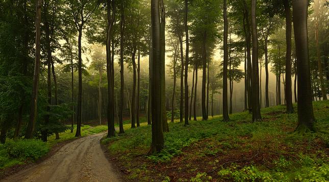 Cestou na Bukovú horu