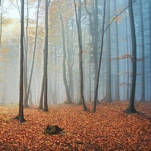 ticho lesa