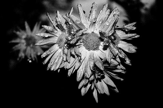 Kvety v tme