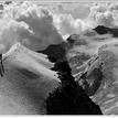 alpska hrebenovka