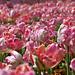 farebná jar