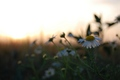Sunset-filka so zmyslom pre gyc