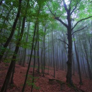 Môj les