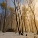 Zlatý les