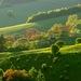 Zelená je tráva...