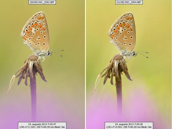 Práca s prirodzeným svetlom v makrofotografii