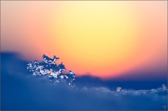 ~ Fire and Ice ~