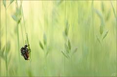 ~ in the fields ~