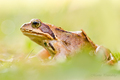 Grass & Frog