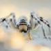 Pavúky