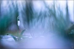 ~ Spring awakening ~