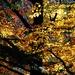 jesenná maľba