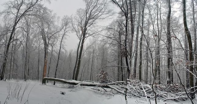 kus dreva
