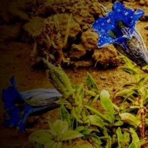 Kvet VI.