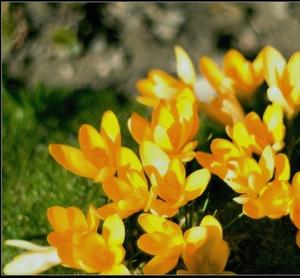 Kvety.