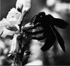 Hmyz.